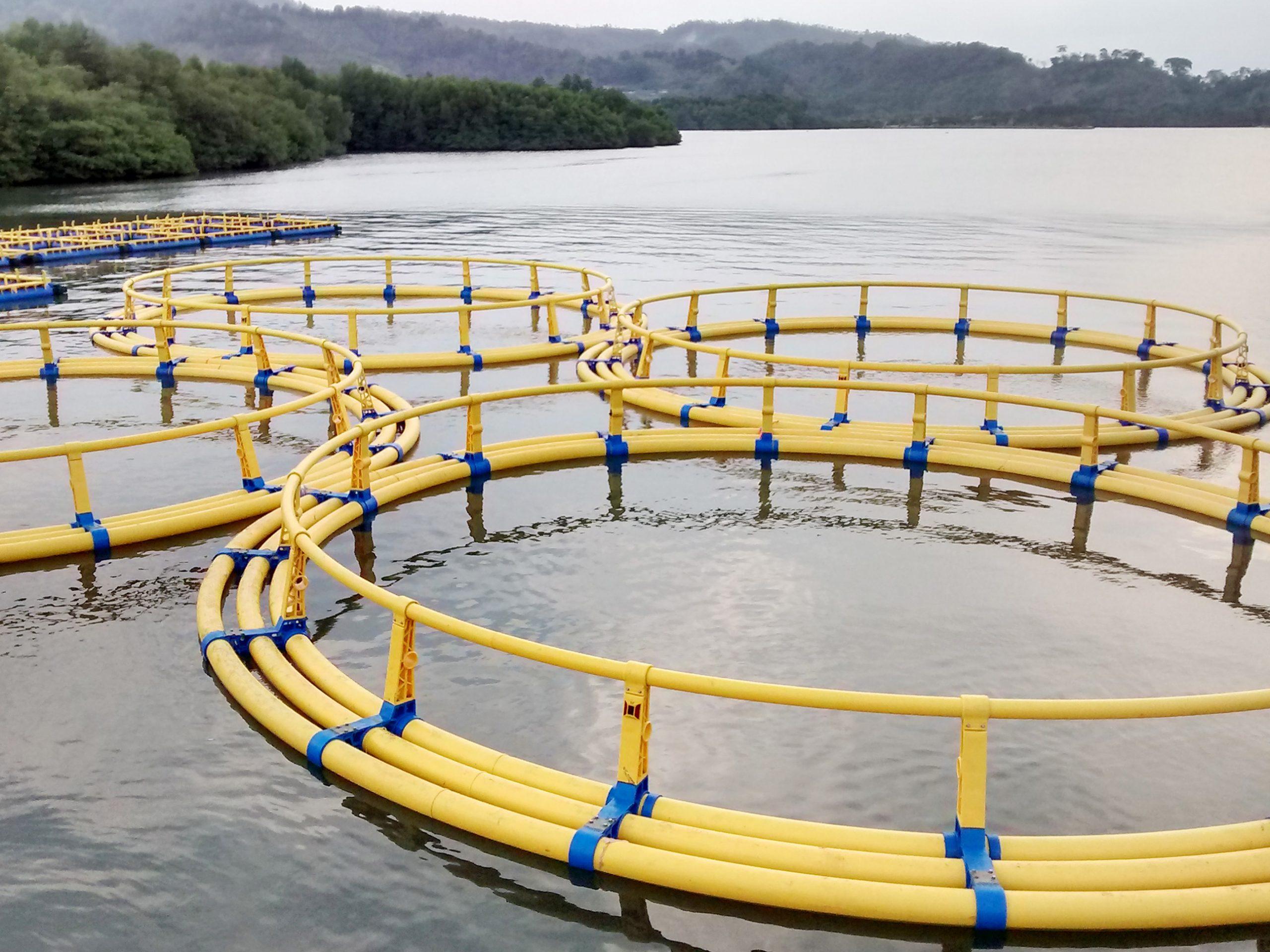 Mengenal Keramba Jaring Apung yang Digunakan untuk Budidaya Ikan